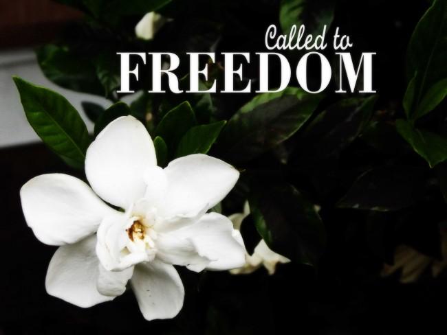 Freedom Calls Me